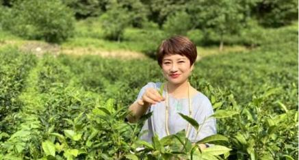 陕西省柞水县翠峰茶叶 迈向产业发展黄金路